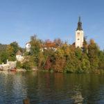 スロベニア ブレッド 546DAYS(OCT/13/2019)