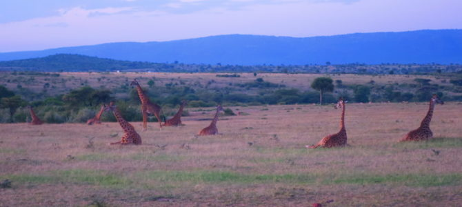 ケニア マサイマラ 363DAYS  (MAR/21/2019)