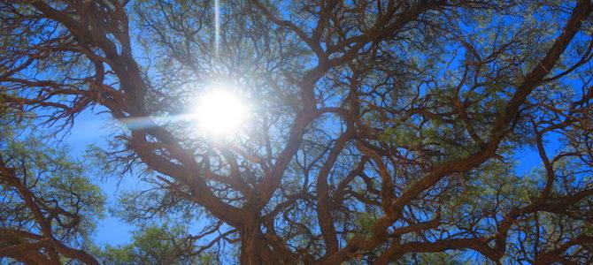 ナミビア ナミブ砂漠  389DAYS  (APR/16/2019)